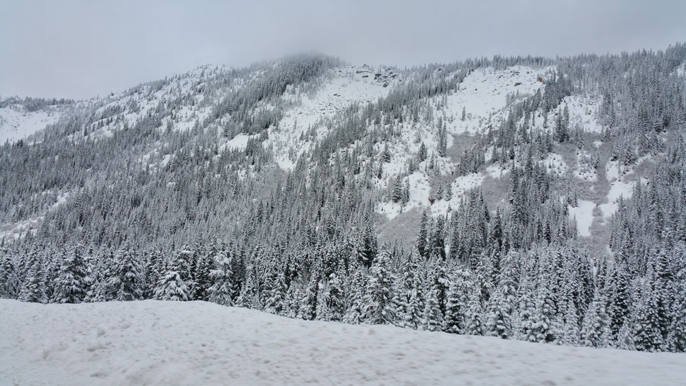 Snow on Stevens Pass